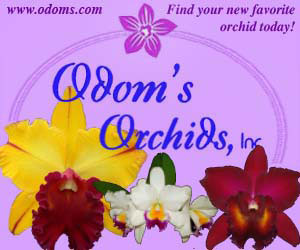 Odom's Orchids