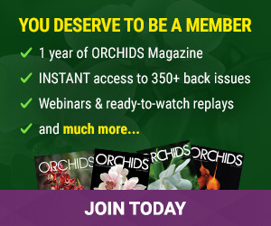 Join the American Orchid Society