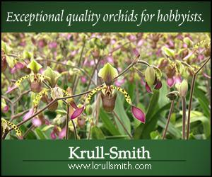 Exceptional quality orchids