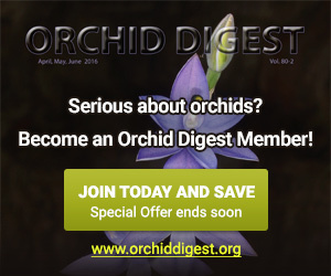 Orchid Digest
