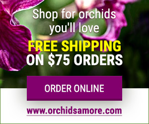 OrchidsAmore.com - Shop for Orchids You'll Love