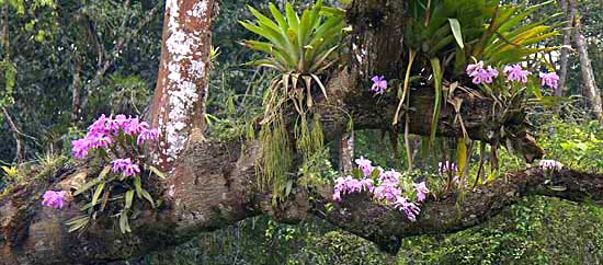 Growing Cymbidium Orchids in addition Growing Orchids moreover Palm Tree Stump Ideas additionally Types Of Orchids 2 in addition White Butterfly Orchid Flower Orchidaceous Orchid Blog White Orchid Flower. on growing orchids beginners