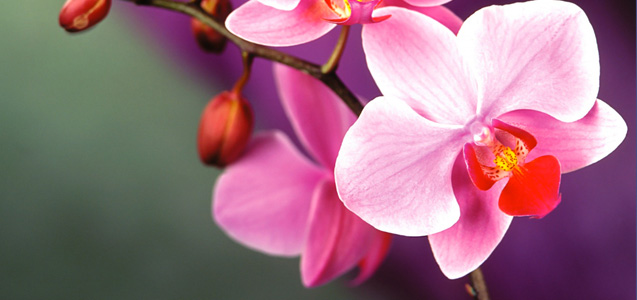 orchid care, Beautiful flower