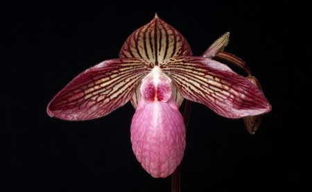 Basics of Orchid Names