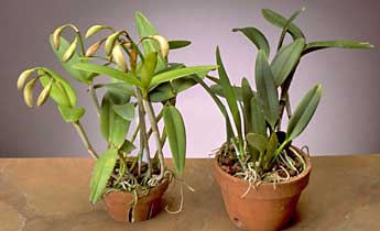 Orchids 101