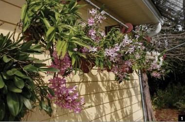 A importância do ar fresco para as Orquídeas