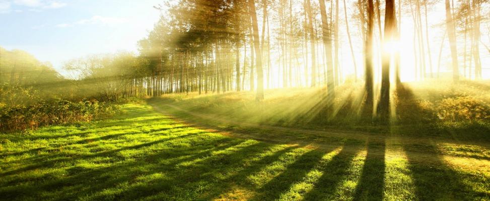 Princípios da Luz – Entendendo o básico para cultivar orquídeas melhores