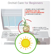 Free Ilrated Beginner S Guide To Orchid Care